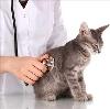 Ветеринарные клиники в Симе